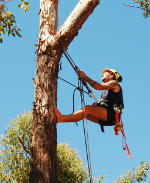 me, up a tree, with ropes and harness